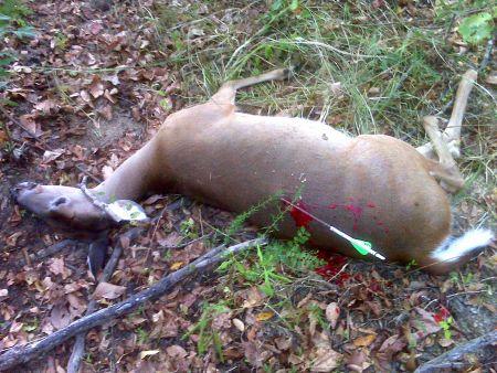 murdered deer